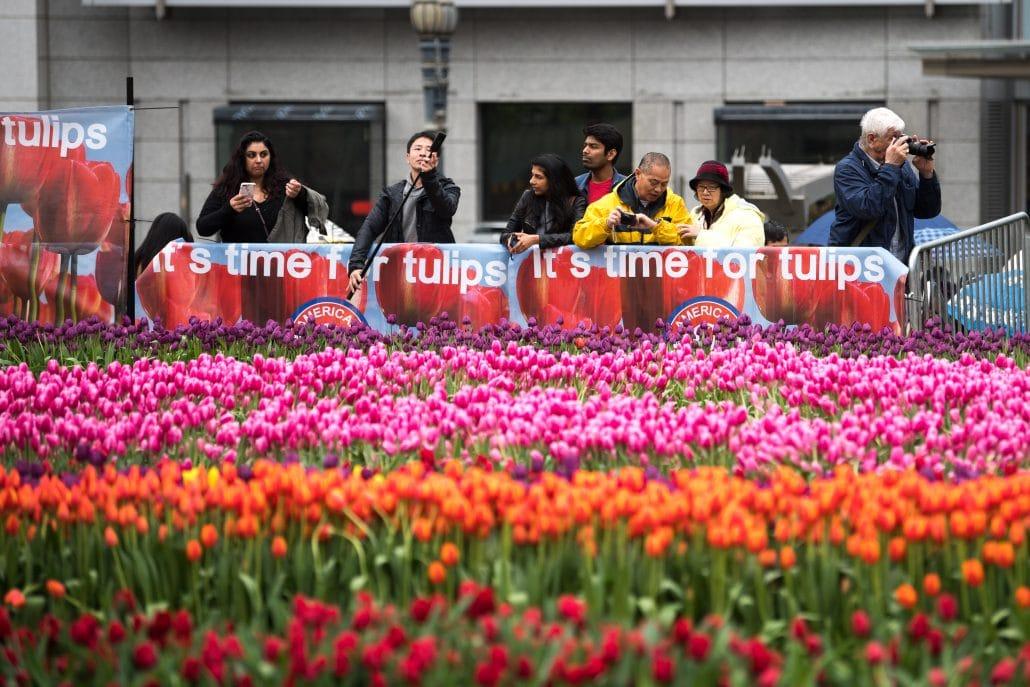 Haakman Flowerbulbs BV @ American Tulip Day 2019