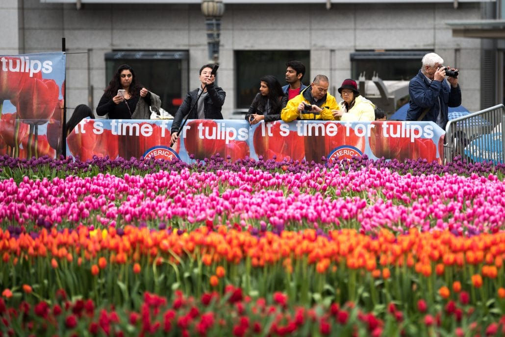 Haakman Flowerbulbs BV @ Американский день тюльпанов 2019